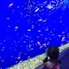 今度は大阪の水族館へ