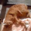 猫とアロマ、お香、香水、洗剤、空間除菌剤のこと