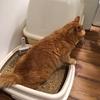 留守中の猫たち、トイレは多い方が良い