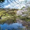 春の自然教育園は、可憐な花が咲き乱れる都心のオアシス