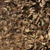 熟す実も枯るる葉も同じ枝にあり