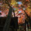高尾山の秋の風物詩「高尾山もみじまつり」の紅葉