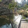 菅刈公園の池(東京都目黒)