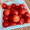 タイの美味しいトマトを発見!