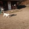 犬の「今日を生きる」。