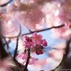 桜をカメラで撮影する際の設定と撮り方のコツ