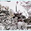 梅と雪と瑠璃光寺 弐の巻
