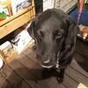 神戸元町、介助犬PR犬を引退した「オリザ」に逢えるお店ハハハクレープ!