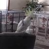 爆笑っ!おすすめの動物動画っ!