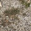 春の除草を簡単にする方法から一週間