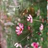 立川の花と中野の人 #filmphotography