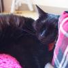 今日の黒猫モモ&白黒猫ナナの動画ー684