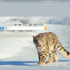 マイクロソフト、Bingプレビュー版を公開