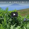 一度は見たいお花畑 北海道礼文島・利尻島