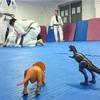 ねわワ宇都宮 10月5日の柔術練習