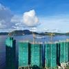 香港の住宅建設:利南道66號項目 平均2,000sqft、295戸の高級住宅、着々と建設作業が進む(龍光地産と合景泰富)