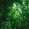 新緑のチカラ