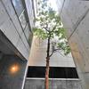 【室内写真集】レキシントンスクエア北堀江 1R 48.60平米