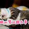大事なのは睡眠時間より睡眠の質!睡眠の質を上げるためにやったこととその結果