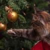 クリスマスの準備に忙しい、12月のバンクーバー
