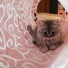 心の洗濯のため、休日猫カフェは大いにありだという気付き