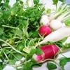二十四節気 1月6日より小寒。七草がゆの意味とおすすめハーブはセリとクミン