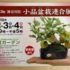 10/2〜4 神奈川県小品盆栽連合展