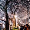 東京で桜を撮り歩いてみた、東京の桜の撮影スポット紹介