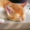 私は不眠症かも?!安眠・快眠を運ぶ生活習慣のポイント4つをご紹介します!