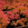自室窓から紅葉撮影