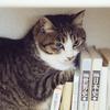【断捨離】学生時代の教科書・ノート・プリント類は断捨離すべきか?