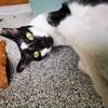 タイ猫の写真を中心にツイッターのフォロワー数が増加。まだまだ初心者の動画編集は(トビネコ)。