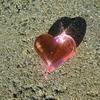 【クレイジーダイヤモンド】〜低感度スイッチで太く・高硬度に生きる〜
