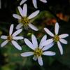 9月24日花と花言葉・歌句
