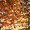 小春日和の秋の日:岩瀬スポーツ公園