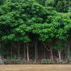 精霊と黄金の仏たちが棲む古都、ラオス【Luang Prabang】。