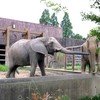 【東京】ハイブリッドレジャーランド、東武動物公園の動物が魅力的!