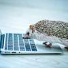 【日本経済新聞】「貸付先情報開示へ ネット融資仲介、淘汰進む契機に」を読んでの感想