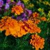 夏の花・秋の草