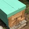 初心者が養蜂はじめてみた!巣箱1箱で取れるハチミツの量は?養蜂に必要な最低限の道具も紹介!