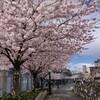 桜の季節とコロナ禍のヘアサロン