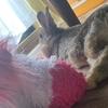 うさぎの基本的な飼育環境と、うさぎとの生活について。