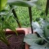 家庭菜園で自然の凄さを改めて実感した話【自然を大切にしよう】