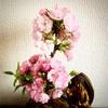 昨日の桜井。