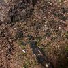 梅の根っこ周辺に謎の粒…