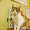 ねこレポート24「滋賀・保護猫カフェねこのおうち」