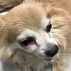 犬の目の下が腫れちゃった!!