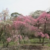 4月6日 千本花桃園