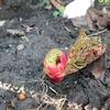 春の気配! 暖かくなってきたので庭を整頓。