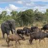 日帰りサファリ!ハラレ近郊の動物保護区3つを紹介!